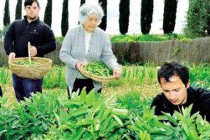 """Una delle persone anziane coinvolte nel progetto """"Orto Felice"""", che insegnano a due giovani con disabilità intellettiva come curare l'orto"""