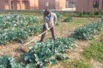 Una persona con disabilità intellettiva impegnata in àmbito di un progetto di agricoltura sociale