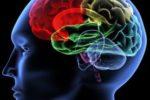 La malattia di Huntington è una patologia del cervello di origine genetica, determinata dalla perdita progressiva di cellule nervose (©V. Yakobchuk - Fotolia)